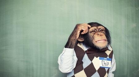 Orangutans-Thinking-Chip